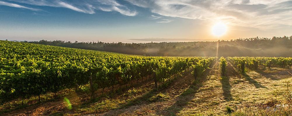 tuscany-field